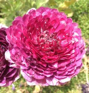 Beltane Flower