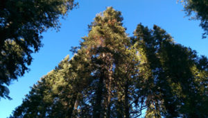 I look up, past the trees, to the sky